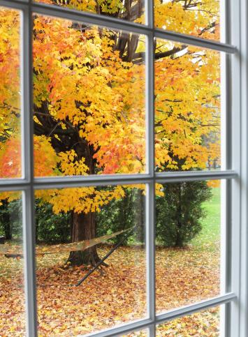 Sugar maple「Autumn Leaves Through Back Yard Bay Window」:スマホ壁紙(18)