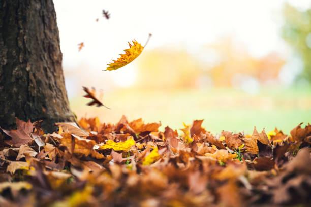 秋の木から落ちていく葉:スマホ壁紙(壁紙.com)