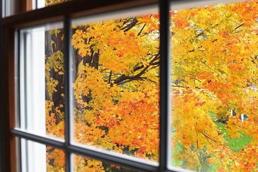 Sugar maple「Autumn Leaves Through Upstairs Window」:スマホ壁紙(10)