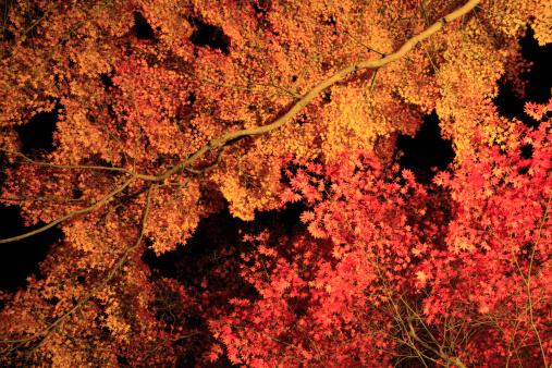 秋+京都「Autumn Leaves at Kasagi Mountain, Kasagi, Souraku, Kyoto, Japan」:スマホ壁紙(16)