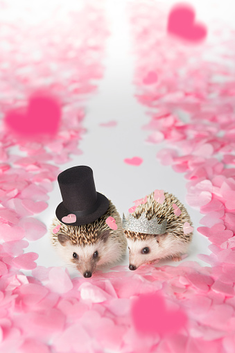 Married「Hedgehog bride and groom walking down the aisle」:スマホ壁紙(19)