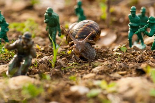 snails「Snail warfare」:スマホ壁紙(11)