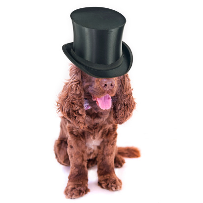 シルクハット「Cocker spaniel wearing Black Top hat」:スマホ壁紙(13)