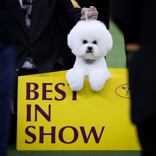 Decisions「Annual Westminster Dog Show Takes Place In New York City」:写真・画像(16)[壁紙.com]