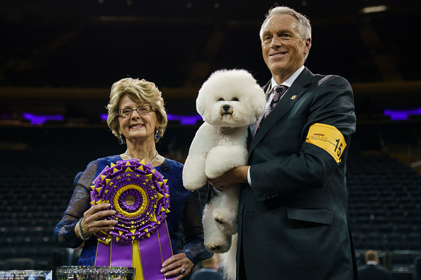 Decisions「Annual Westminster Dog Show Takes Place In New York City」:写真・画像(14)[壁紙.com]