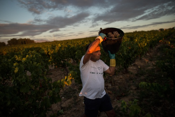 David Ramos「Spanish Emigrants Travel To Perpignan For French Wine Harvest」:写真・画像(18)[壁紙.com]
