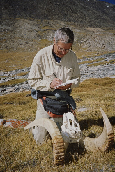 Horned「Conservationist In Wakhan」:写真・画像(6)[壁紙.com]