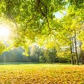 林間の空き地壁紙の画像(壁紙.com)