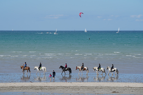 Horse「Travel Destination: Brittany」:写真・画像(14)[壁紙.com]