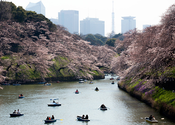Tokyo Tower「Cherry Blossom Season Starts In Japan」:写真・画像(15)[壁紙.com]