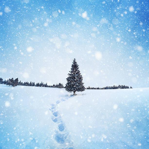 Winter Tree:スマホ壁紙(壁紙.com)