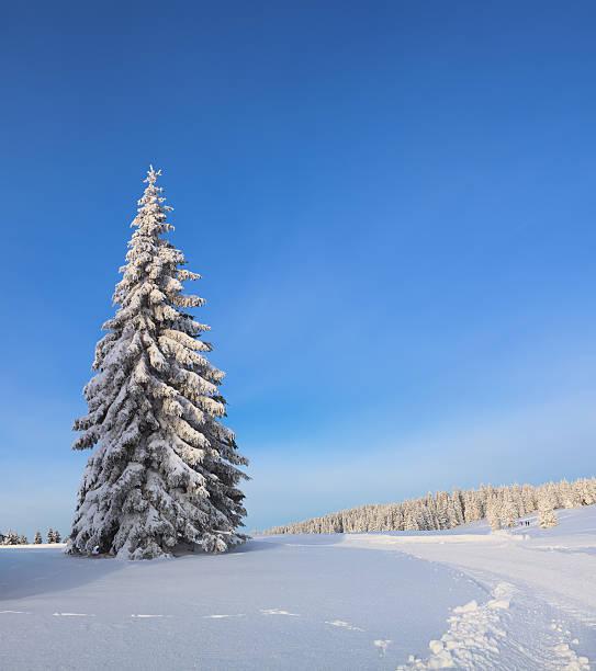 冬の木:スマホ壁紙(壁紙.com)