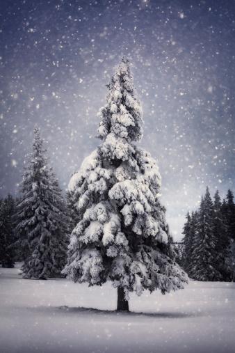 吹雪「冬の木」:スマホ壁紙(4)