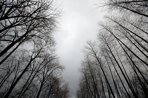 Evil「winter trees and clouds」:スマホ壁紙(14)