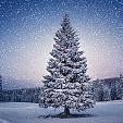 クリスマスツリー壁紙の画像(壁紙.com)