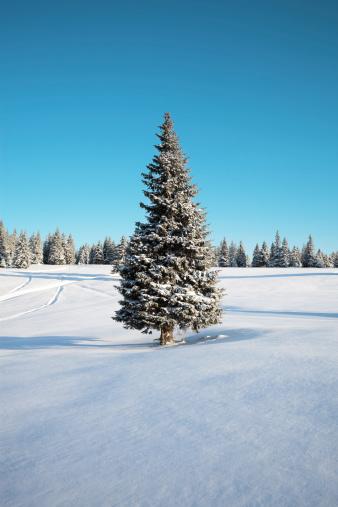 雪山「冬の木」:スマホ壁紙(18)
