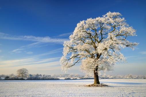 Rolling Landscape「Winter Tree」:スマホ壁紙(19)