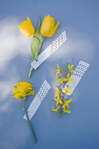 水仙「Forsythia, daffodil and tulip with tags」:スマホ壁紙(12)