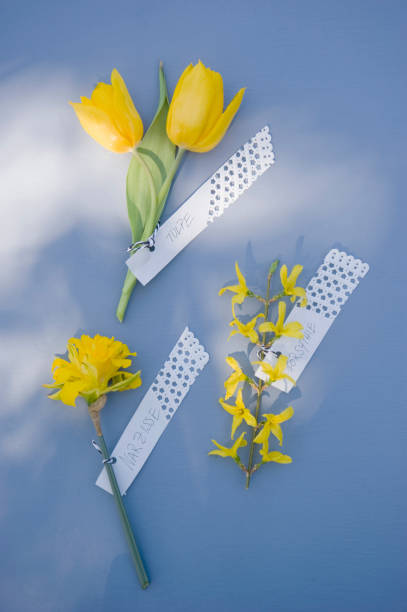 Forsythia, daffodil and tulip with tags:スマホ壁紙(壁紙.com)