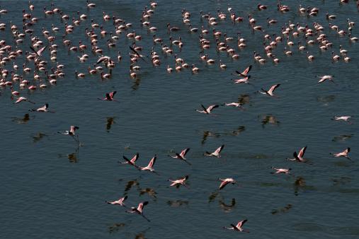 Lake Bogoria National Park「Aerial viw of Flamingos」:スマホ壁紙(17)