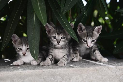 Kitten「Three kittens on a wall」:スマホ壁紙(12)
