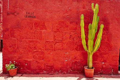 Monastery「Peru, Arequipa, red wall with cactus at Santa Catalina Monastery」:スマホ壁紙(18)