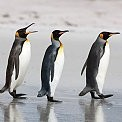 Falkland Islands壁紙の画像(壁紙.com)