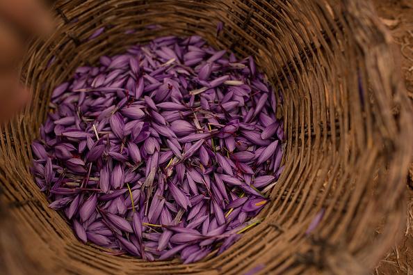 Spice「Saffron Harvest In Castilla La Mancha Region」:写真・画像(13)[壁紙.com]