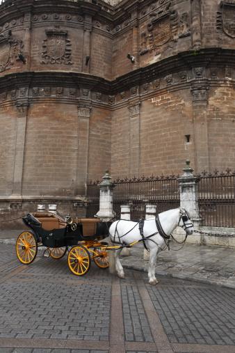 Horse-drawn carriage「伝統的なアンダルシア馬」:スマホ壁紙(10)