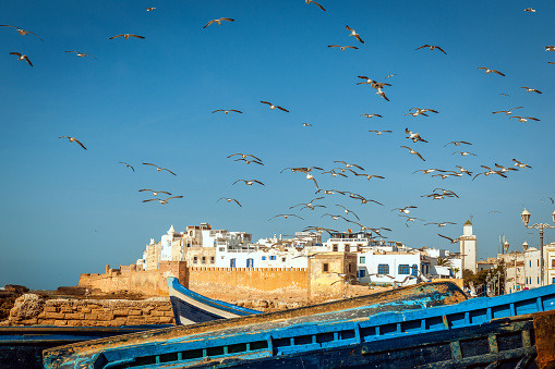 Fortified Wall「Flock of seagulls over the fishing town Essaouira, Morocco Africa」:スマホ壁紙(15)