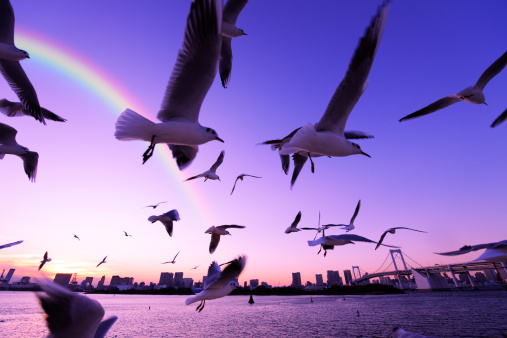 虹「Flock of Segulls Flying Near Tokyo」:スマホ壁紙(6)
