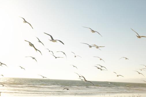 ビーチ「Flock of seagulls」:スマホ壁紙(8)