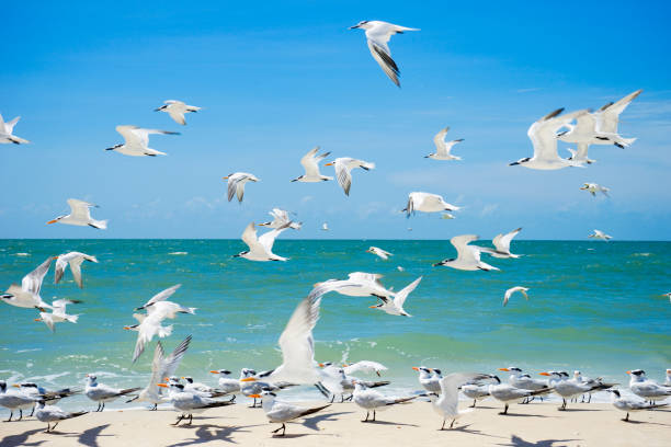 Flock of seagulls on the beach:スマホ壁紙(壁紙.com)