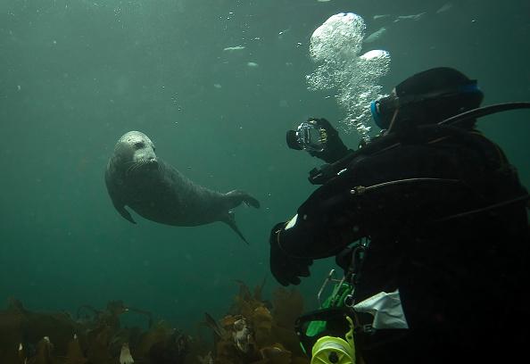 Aquatic Mammal「Visitors Enjoy The Wildlife At The Farne Islands」:写真・画像(17)[壁紙.com]