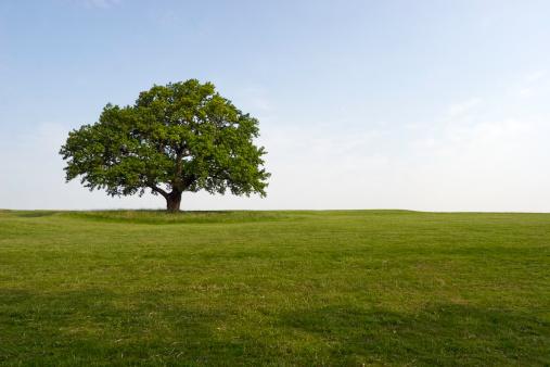 Durability「Summer Oak」:スマホ壁紙(9)