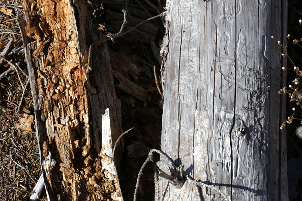 Plant Bark「As Summer Temperatures Rise Bark Beetle Infestations Intensify」:写真・画像(0)[壁紙.com]