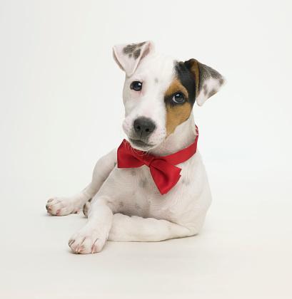 Formalwear「Celebrity dog」:スマホ壁紙(15)