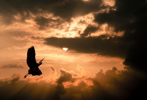 Atmosphere「Crane at sunset, dramatic cloudy atmosphere」:スマホ壁紙(9)