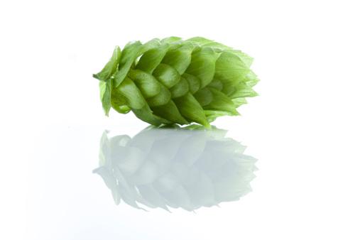 Pacific Northwest「Fresh Hops」:スマホ壁紙(1)