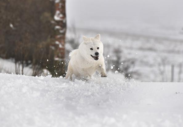 Snow「Storm Fionn Brings Chaos To The UK」:写真・画像(6)[壁紙.com]