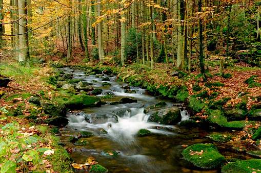 Bavarian Forest「Autumn landscape with brook in forest」:スマホ壁紙(15)
