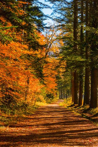 月「秋の風景」:スマホ壁紙(7)
