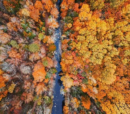 Boreal Forest「Autumn Landscape」:スマホ壁紙(11)