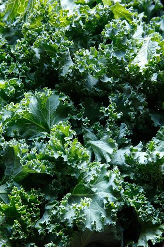 Cabbage「fresh chopped kale close-up」:スマホ壁紙(1)