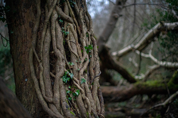 Forest「Views Of Moseley Bog Where JRR Tolkien Played As A Child」:写真・画像(16)[壁紙.com]