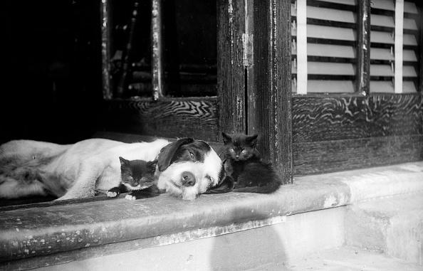 猫「Best Of Friends」:写真・画像(9)[壁紙.com]