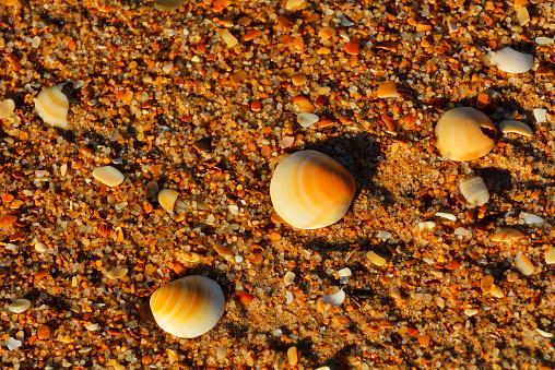 90マイルビーチ「Shells on the Beach」:スマホ壁紙(8)