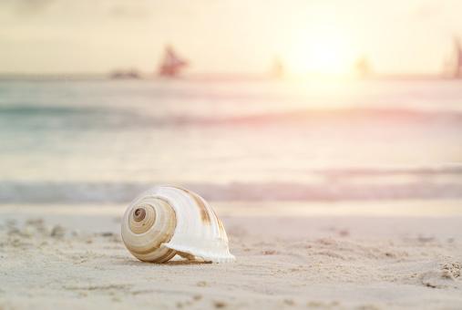 貝殻「Shells on the beach」:スマホ壁紙(13)