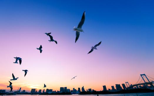 Birds「Rainbow bridge at dusk, Minato ward, Tokyo Prefecture, Honshu, Japan」:スマホ壁紙(18)