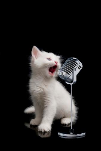子猫「小さなシンガー」:スマホ壁紙(5)